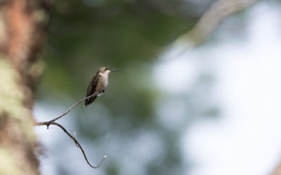 Animals_033_Hummingbird_01